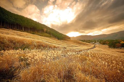 日本 絶景 箱根 仙石原高原