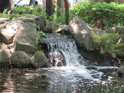 芝公園 水
