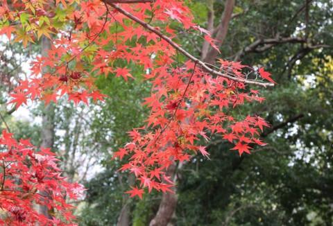 下鴨神社 「糺の森