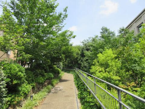 遊歩道 公園