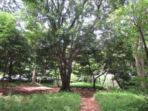 高輪の森公園
