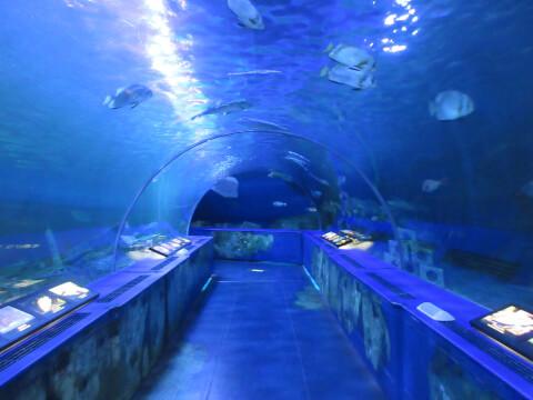トンネル水槽 しながわ水族館