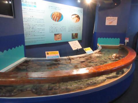 タッチプール 水槽