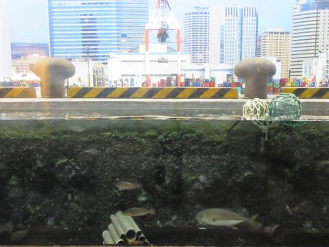 品川と海 しながわ水族館