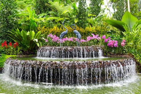シンガポール国立ラン園