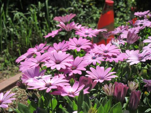 イタリア公園 花