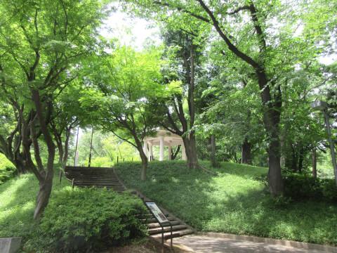 新宿中央公園 新緑