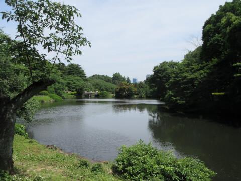 新宿御苑 日本式庭園
