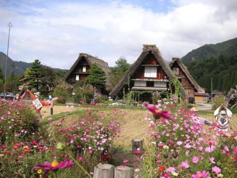 shirakarago1