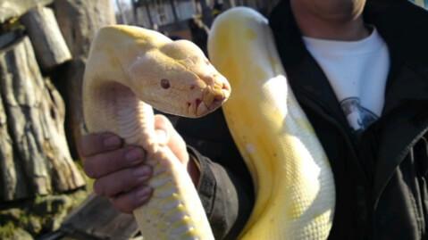 snake_nishiki