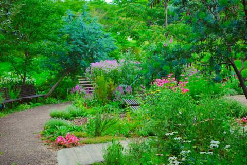 生活の木メディカルハーブ薬香草園