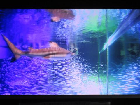 水中カメラ サンシャイン