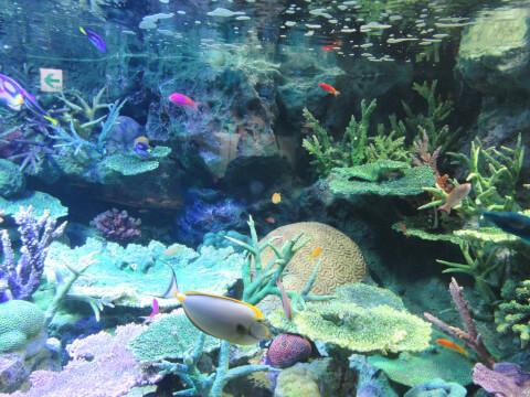 グレートバリアリーフ サンシャイン水族館