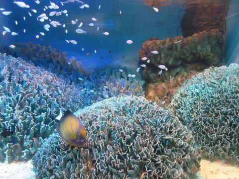 沖縄 サンシャイン水族館