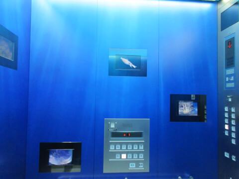 水族館 エレベーター