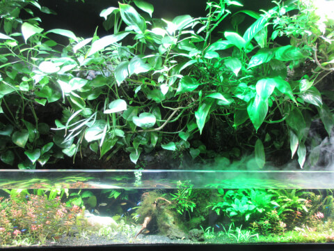 アマゾン サンシャイン水族館