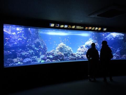 館内 サンシャイン水族館