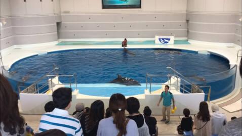 cutedolphinshows