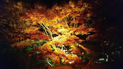 須磨離宮公園 ライトアップ
