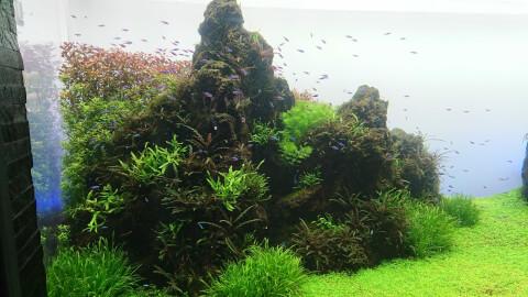すみだ水族館 自然水景