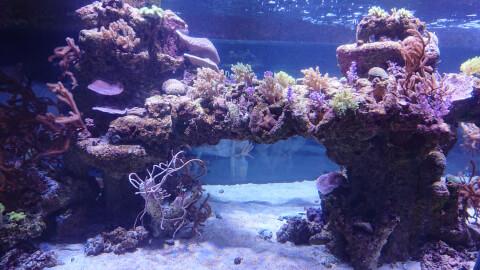 すみだ水族館 サンゴ礁