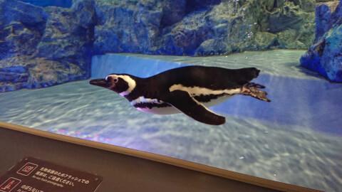 ペンギン すみだ水族館