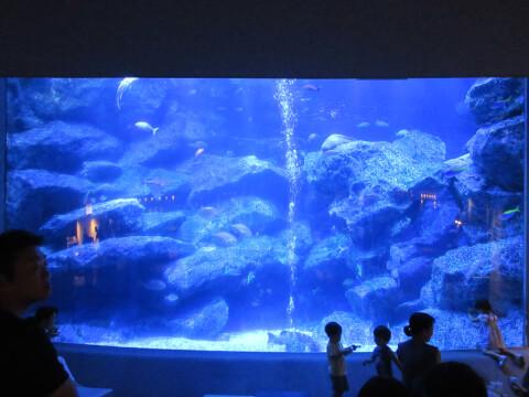 東京大水槽