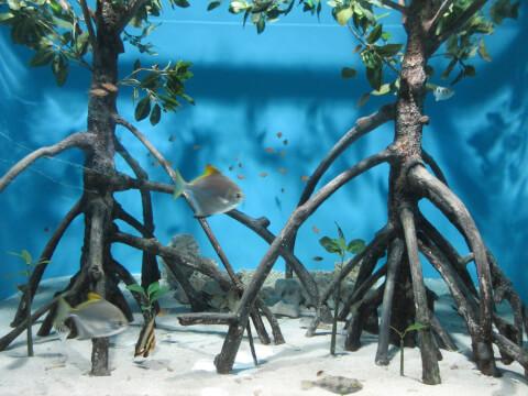 マングローブの森 サンシャイン水族館