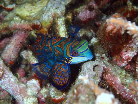 スラウェシ島 海 魚 インドネシア