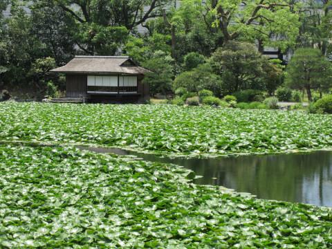庭園 京都