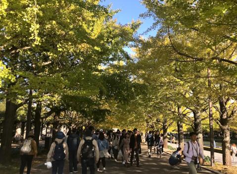 昭和記念公園_イチョウ並木