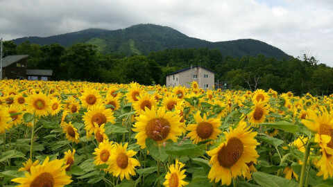 東山花の丘_ニセコ