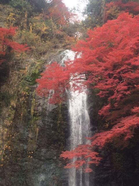 滝箕面大滝