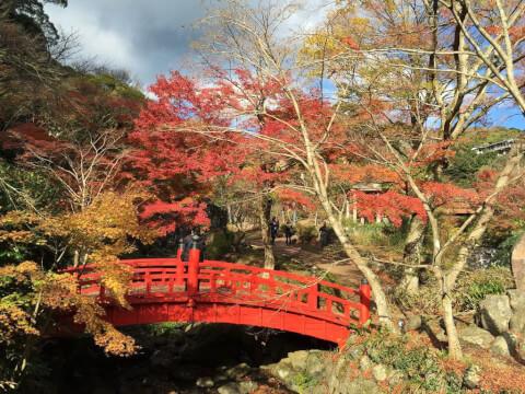 熱海梅園 紅葉