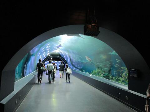 アクアパーク品川 ドーム