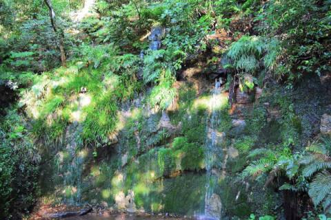 等々力渓谷-不動の滝
