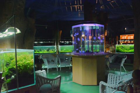 クラゲ水槽の周辺
