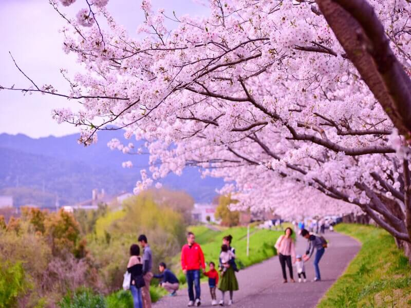 観光 徳島 県