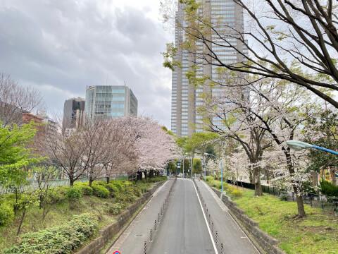 春の新宿中央公園