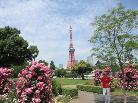 東京タワー 花