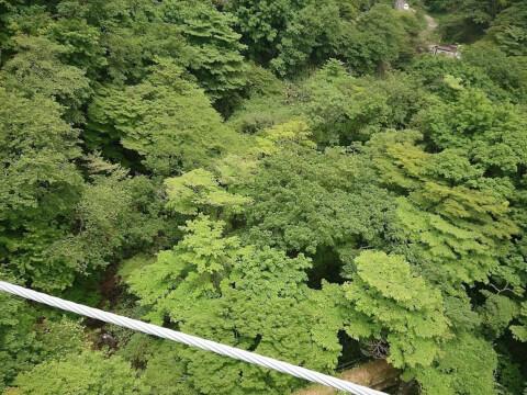 つつじ吊り橋の眺望
