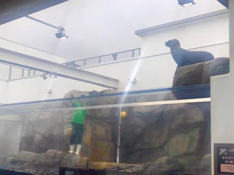 仙台うみの杜水族館-オタリア