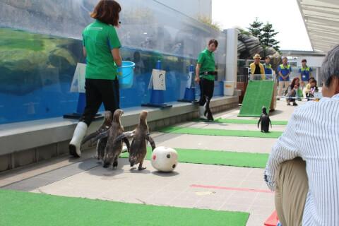 仙台うみの杜水族館-ペンギン