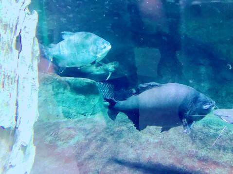 仙台うみの杜水族館-魚の展示