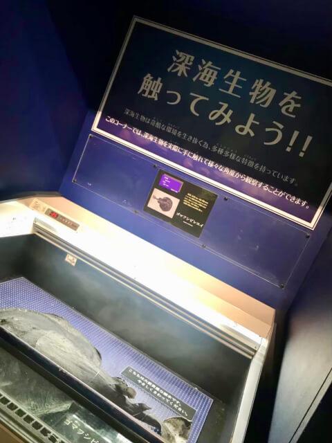 仙台うみの杜水族館-深海生物を触ってみよう