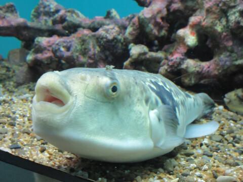 水槽 うみたまご 魚