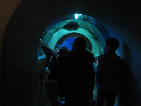 うみたまホール トンネル