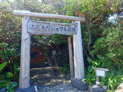 屋久島 志戸子ガジュマル園