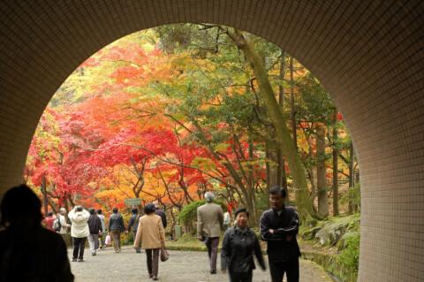 弥彦公園 トンネル