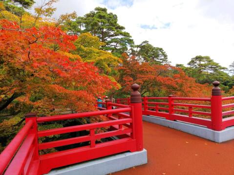 弥彦公園 観月橋
